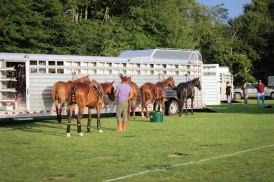 horses Newport, RI