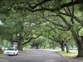 city park oaks new orleans