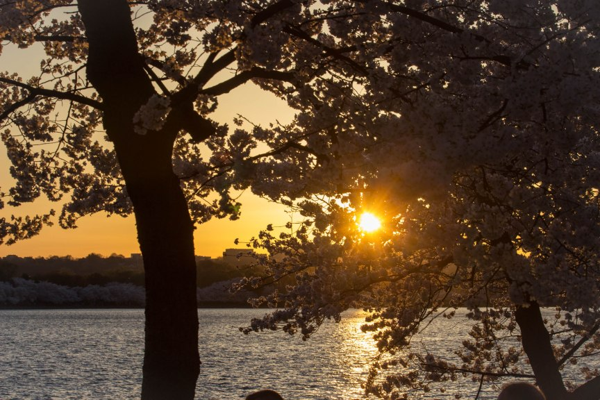 Tidal Basin sunset