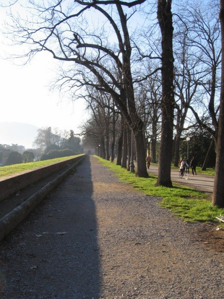 Lucca Italy city wall