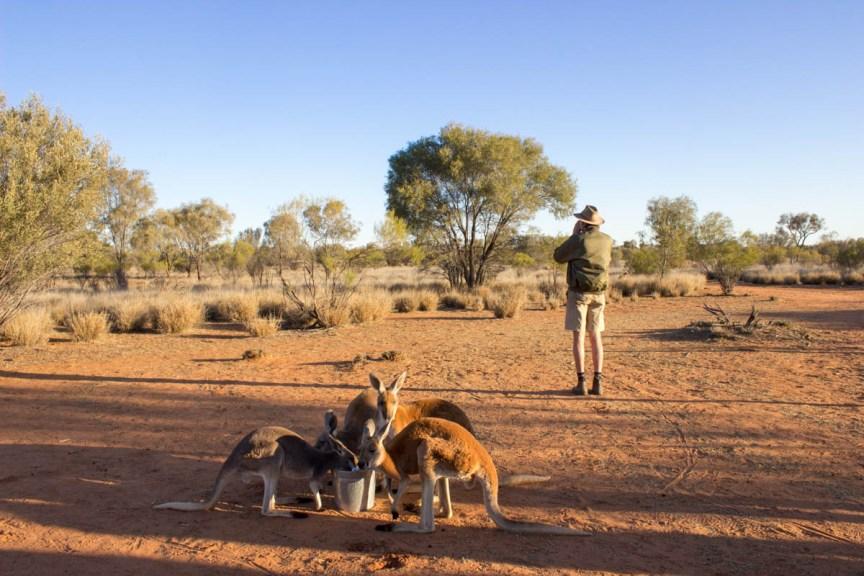[img] how to visit the kangaroo sanctuary Brolga