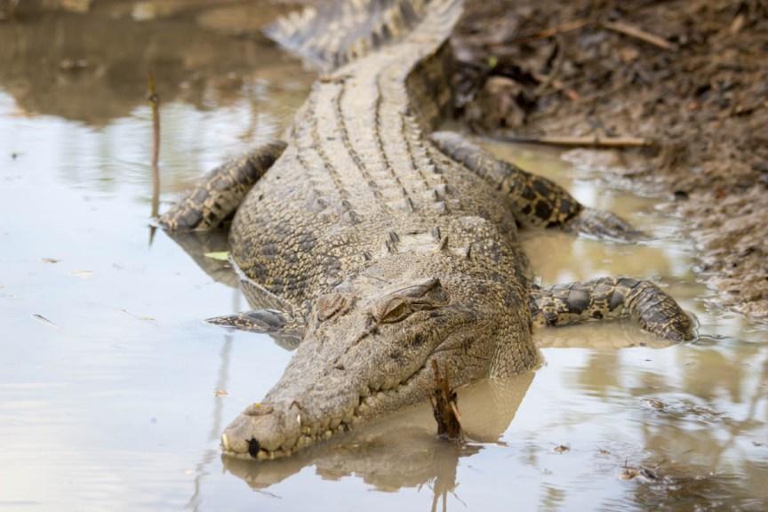 [img] Kakadu National Park crocodile