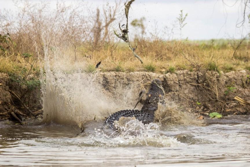 [img] kakadu and Litchfield tours Corroborate Billabong crocodile