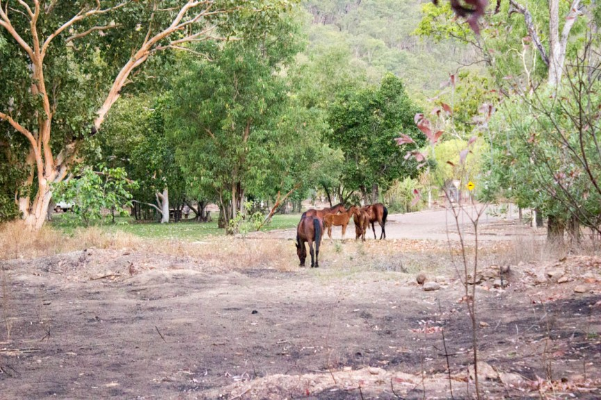 [img] Kakadu National Park wild horses
