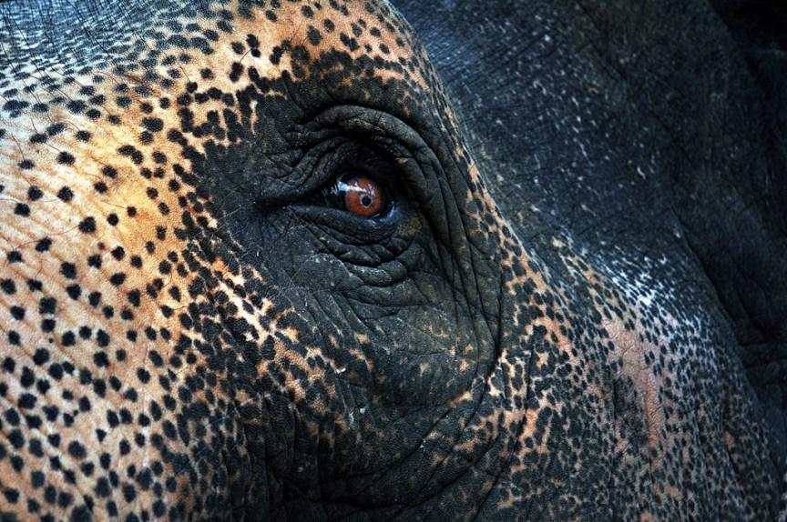 [img] Chiang Mai elephant 2017 travel plans