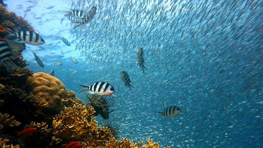 [img] snorkeling Sodwana South Africa