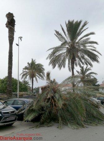 palmeratorredelmar1