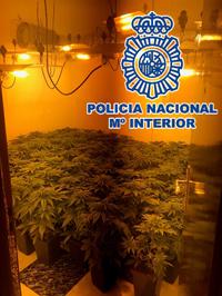 Se han practicado dos registros en las viviendas de los investigados; en uno localizaron un cultivo de marihuana con 94 plantas y en el otro hallaron elementos necesarios para la instalación de un laboratorio de cannabis, delitos por los que también fueron imputados ambos investigados.