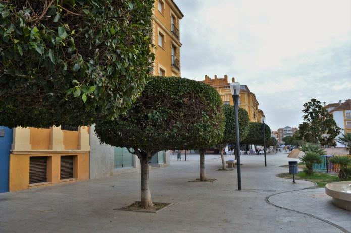El Ayuntamiento de Rincón redacta el primer Plan para gestionar los espacios arbolados del municipio