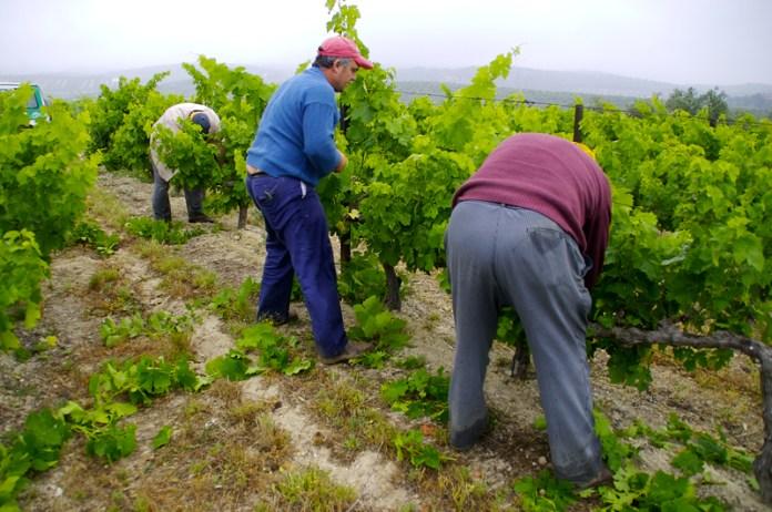 Agricultura trabaja en un proyecto para evaluar el papel del clima, el paisaje y manejo sobre biodiversidad en viñedos