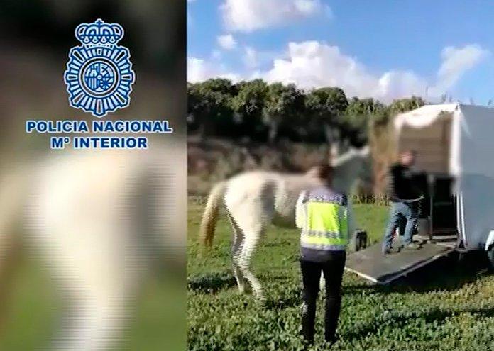 La Policía Nacional detiene en Vélez Málaga a un hombre por un delito de maltrato animal y rescata a cuatro equinos desnutridos