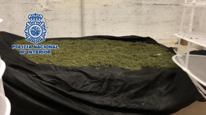 La Policía Nacional desmantela un laboratorio y se incauta de siete kilos de marihuana en cogollos en un sótano de una vivienda de Churriana
