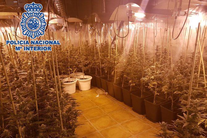 La Policía Nacional desarticula una organización criminal dedicada al tráfico internacional de marihuana y detiene a 21 de sus integrantes