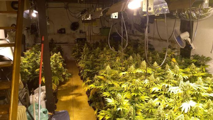 La Policía Nacional desmantela una plantación clandestina en el sótano de una vivienda en Torremolinos y se incauta de 250 plantas de marihuana
