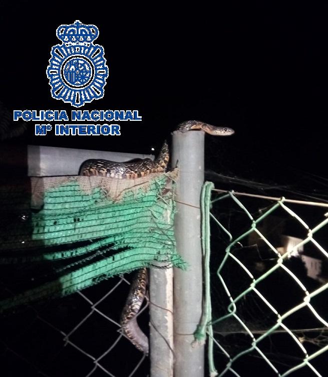 Agentes de la Policía Nacional atrapan una serpiente en el patio de una vivienda