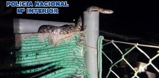 Un agente tomó la serpiente por un extremo y la depositó en una bolsa para su traslado a un paraje natural.