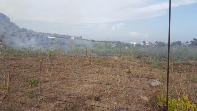 Arden cerca de 1.000 metros de una plantación de Moringa en una finca de Almayate