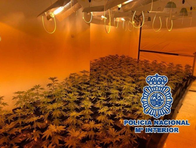 La Policía Nacional desmantela un invernadero indoor en Benalmádena con 1.100 plantas de marihuana en su interior