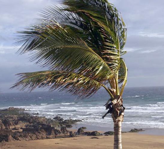 El temporal de viento causa más de 80 incidencias en la provincia de Málaga
