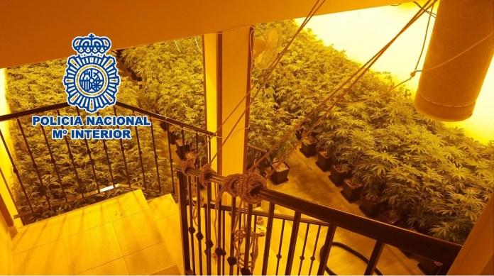 La Policía Nacional se incauta de más de 300 plantas de marihuana en una vivienda en Benalmádena
