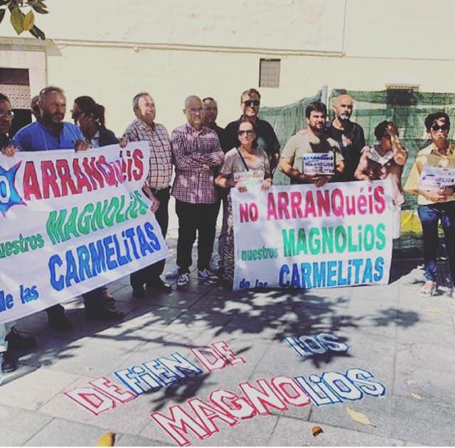 La Plataforma por la Defensa de los Magnolios perfila una propuesta técnica para integrar estos árboles en el proyecto de peatonalización de la plaza de Las Carmelitas