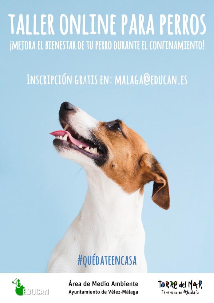 Torre del Mar ofrecerá clases online gratuitas para mejorar el bienestar de sus perros durante