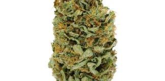 El cultivo casero de cannabis está a la orden del día