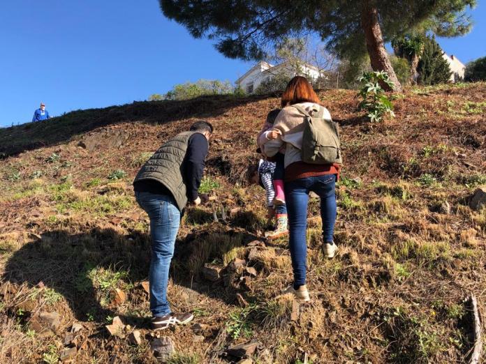 El Ayuntamiento de Rincón de la Victoria realiza la plantación de más de 1.200 ejemplares de arboleda en el municipio durante este último año