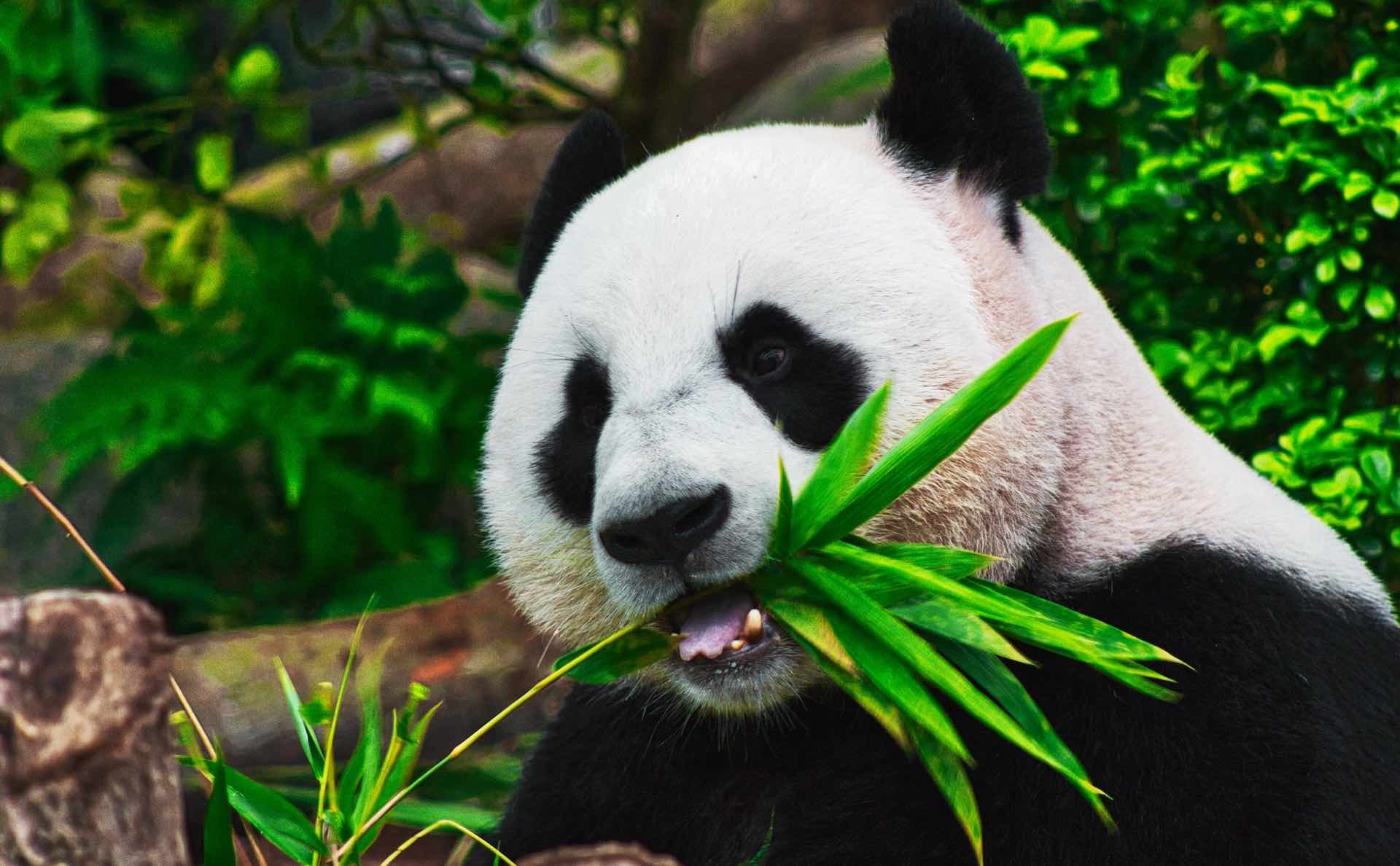 Panda Exchange en Perú