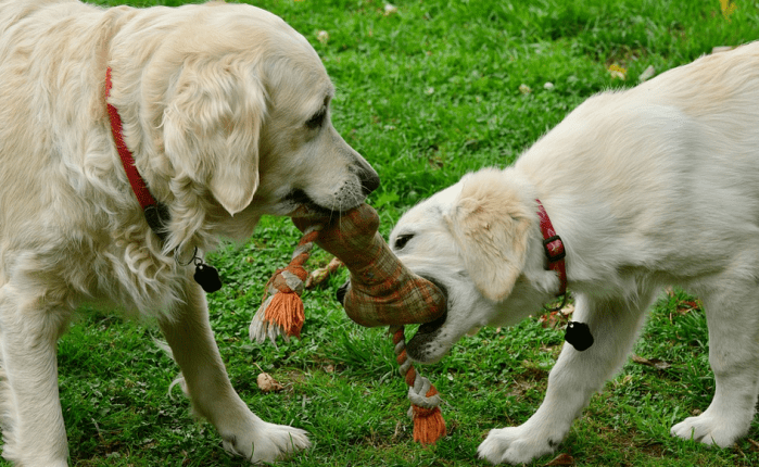 dogs playing with toys