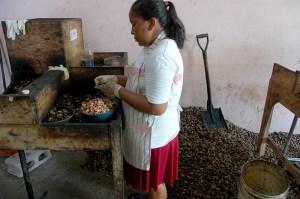 Luego de pasar por el horno la primera vez, a las semillas de marañón se les quita              la cáscara con ayuda de una máquina. Foto Diario Co Latino / Josué Parada