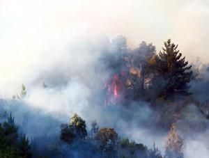 Incendios provocan el mayor desastre forestal de la historia de Chile