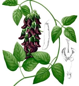 Más de 28.000 plantas tienen propiedades medicinales, muchas desaprovechadas