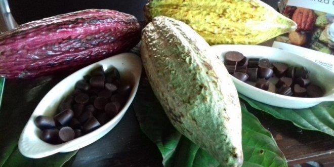 Cacao salvadoreño entre los cuatro mejores de Centroamérica y el Caribe
