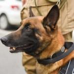 Yankee da Polícia Militar de Balneário Camboriú
