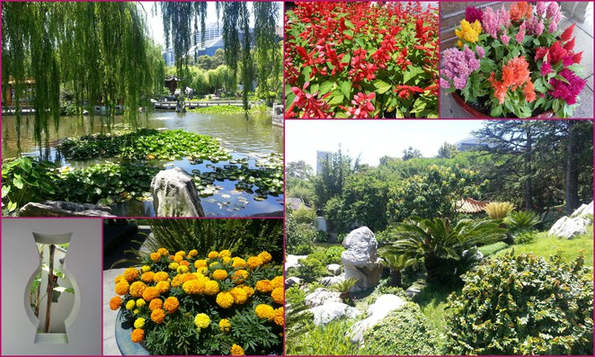 chinese-garden-of-friendship-darling-harbour-china4