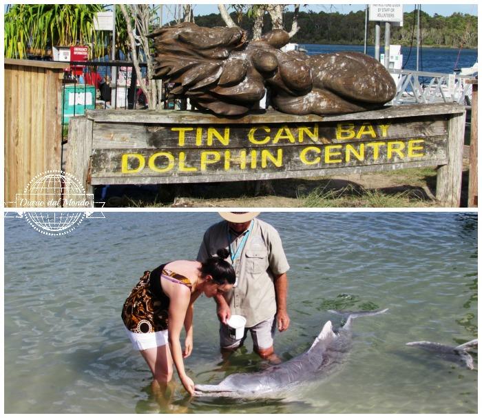 wildlife in Australia