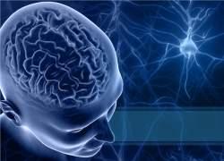 Aumentam evidências de que a meditação fortalece o cérebro