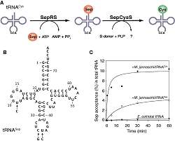 Cientistas usam DNA para projetar proteína artificial viva