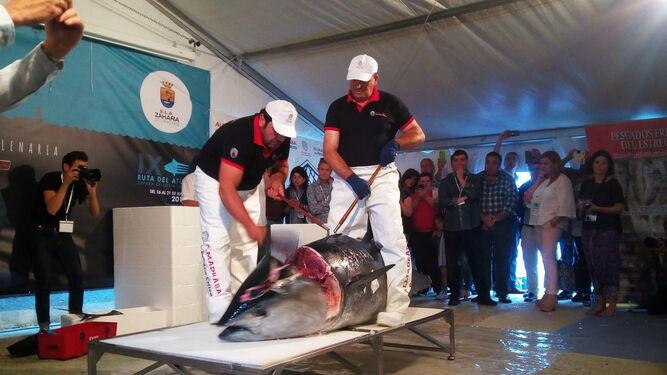 Resultado de imagen de ronqueo del atun