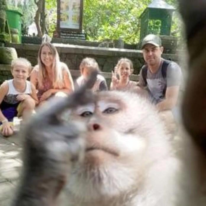 Resultado de imagen para mono en bali tomando selfie con la familia