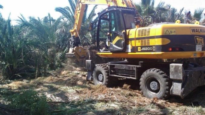 palmeras trituradas