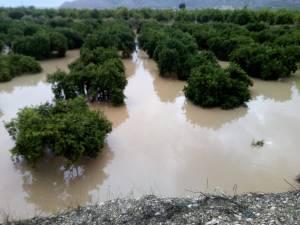 Los agricultores de la Vega Baja ya pueden pedir las ayudas a la Generalitat para paliar los daños de la DANA