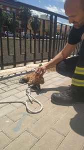 Los bomberos rescatan a un gato tras caer al río Segura en Orihuela