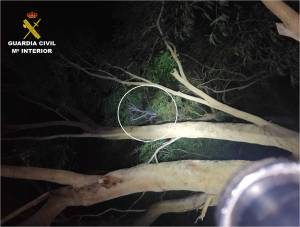Detenido en Guardamar un hombre que estuvo subido a un árbol durante 3 horas para evitar, precisamente, ser detenido
