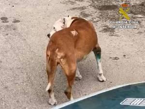 La Guardia Civil de Jacarilla investiga a un hombre por maltrato animal en una pedanía de Orihuela