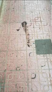 El PSOE de Torrevieja pide al Ayuntamiento un mayor control en la limpieza de los excrementos de mascotas en calles y plazas