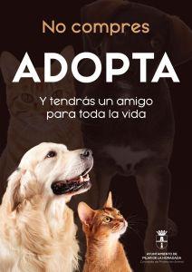 Pilar de la Horadada reduce al 50% el número de animales de su albergue municipal