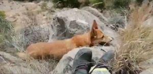 Los bomberos rescatan a un perro atrapado en una zona de difícil acceso en Callosa