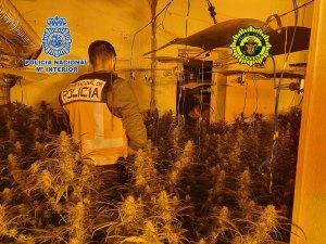 Así fue el gran golpe al narcotráfico en la Calle Arriba: 20 detenidos y más de 1.300 plantas de marihuana incautadas